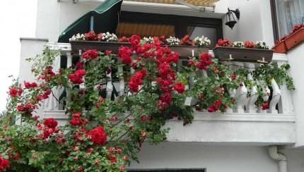 na-ilidzi-najljepsa-dvorista-i-balkoni_1436880814