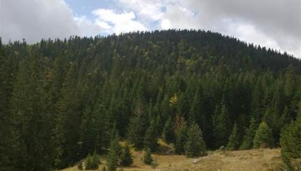 šume(4)